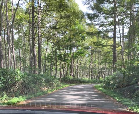 長野県道502号線